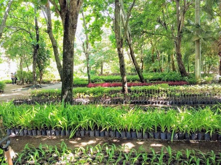 Jardín botánico del Parque Reino Mágico en Veracruz