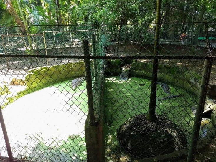 Pantano de cocodrilos en el Parque Zoológico Miguel Ángel de Quevedo