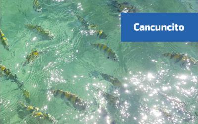 Vista de los peces en Cancuncito