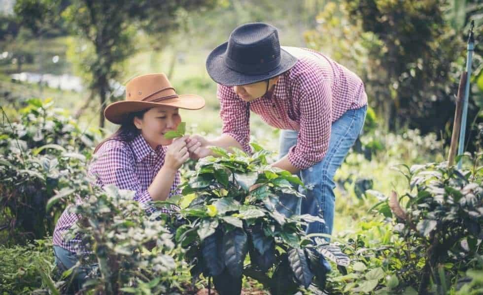 Tour Senderos del café desde Veracruz