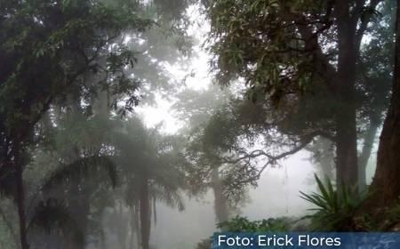 vista del bosque de niebla en la Barranca de Metlac