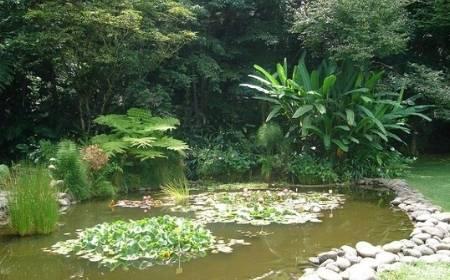 vista del interior del Jardín botánico Francisco Javier Clavijero